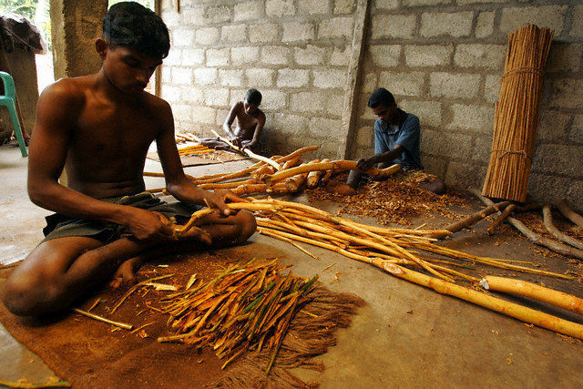Sri Lankan workers scrape cinnamon sticks in a plant in southern Sri Lanka