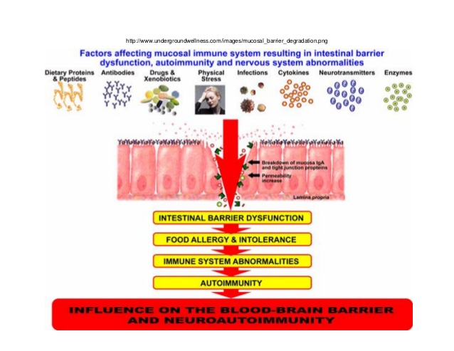 leaky-gut-intestinal-permeability-33-638