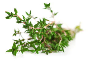thyme-on-white-isolated-backgr-29992982